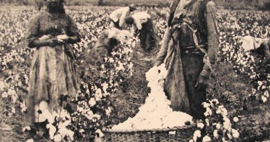 schiavi e piantagioni di cotone